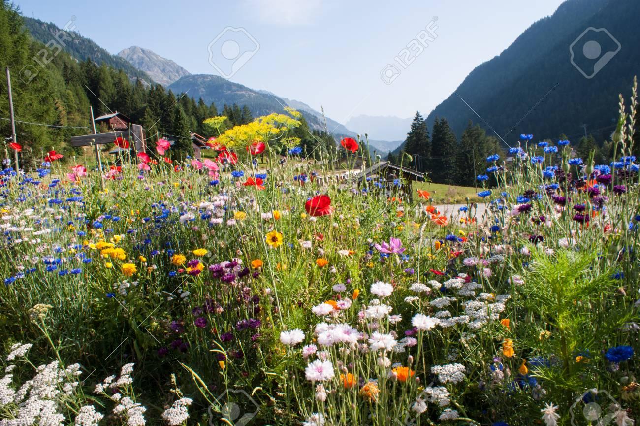 flowers,vallorcine,haute savoie,france