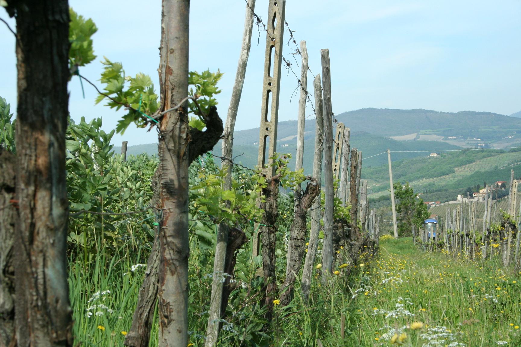 Lavacchio 2007 077